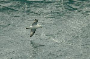 Fulmar - Oban-Barra 31 Aug (Jim Dickson).